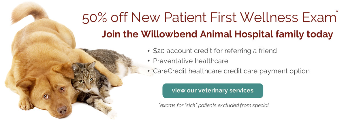 50% off new patient exam